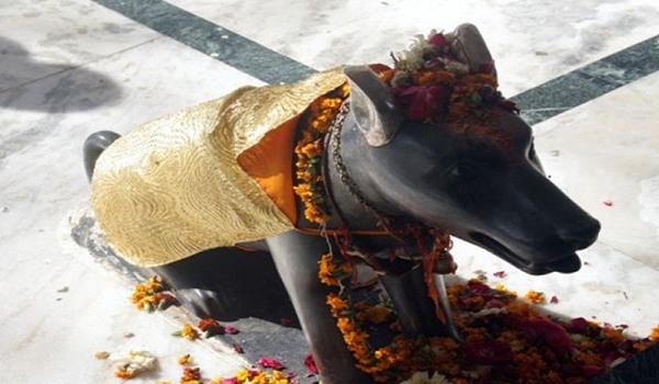 भारत में प्रचलित कुत्ते से जुड़े शुभ -अशुभ विचार!