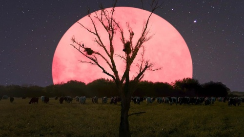 Super Pink Moon | Information